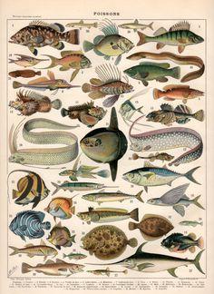 Fish Antique Print 1897 Vintage Lithograph Poisson door Craftissimo