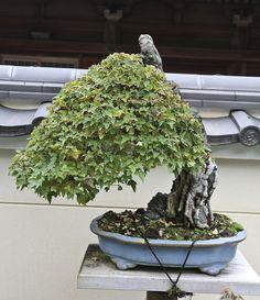 Daiju-en-Bonsai-Garden-8