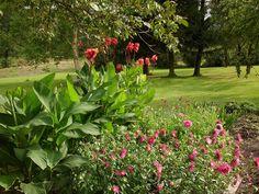 Krásně rozkvetly kany a astrty Plants, Plant, Planets