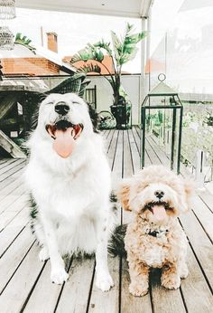 Cute Puppies, Cute Dogs, Dogs And Puppies, Doggies, Cute Baby Animals, Animals And Pets, Funny Animals, Beautiful Creatures, Animals Beautiful
