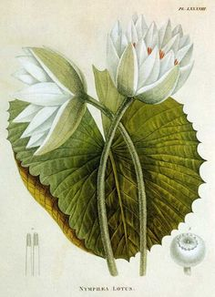 500 Best Botanical Herbal Images images in 2019   Herbal medicine