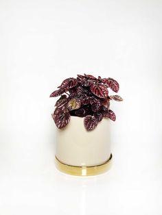 Terri Planter with Saucer – Interior Jungle Plant Pots, Interior Styling, Indoor Plants, House Plants, Planters, Elegant, Ethnic Recipes, Color, Pot Plants