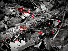 red berries, black and white