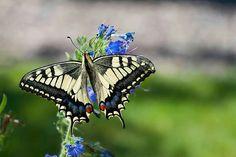 "Square Silk Scarf 31/"" Black w// Green Birdwing Butterfly Pattern Ornithoptera NEW"