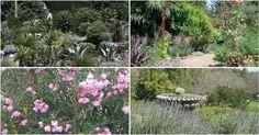 Cómo crear espectaculares jardines de secano