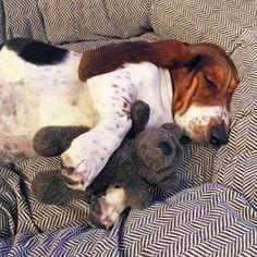 ¿Cuántas horas necesitan dormir al día? ¿Tienen los mismos ciclos de sueño que nosotros? ¿Sufren los mismos problemas que nosotros para dormir? ¿Sueñan? Aquí nos lo cuentan todo.