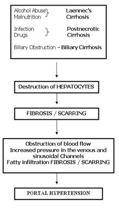 Httpliverbasicsfatty liver symptomsml the most notorious pathophysiology liver cirrhosisg ccuart Image collections