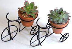 Welded Furniture, Art Furniture, Garden Furniture, House Plants Decor, Plant Decor, Coconut Shell Crafts, Chicken Garden, Cactus Painting, Plant Box