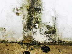 Mold is one of America's perennial households problems, especially to homes located in rainy states and cities, especially those along the coasts. Basically, it is a type of fungus (that branches out to thousands of other types as well) that forms whenever a great amount of moisture is in the air or in but not exclusive to plant-based surfaces like wood and paper.