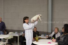 10 januari 2016. Being a steward. Felikat, Nieuw Vennep. Cats, Fashion, Moda, Gatos, Fashion Styles, Cat, Kitty, Fashion Illustrations, Kitty Cats