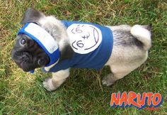 naruto-cosplay-dog