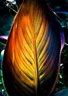 Toutes les tailles | The secret life of plants I | Flickr: partage de photos!