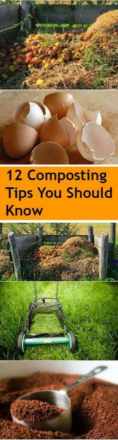 12 Composting Tips and Tricks You Should Know