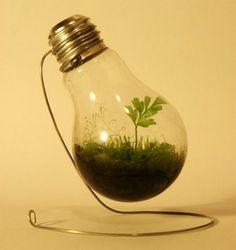 lightbulb plant. here's how to make your own: http://lifehacker.com/5413999/turn-a-lightbulb-into-a-mini+terrarium