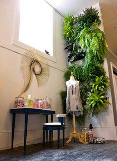 indoor wall of plants