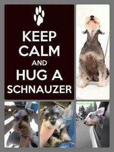 Hug A Schnauzer <3