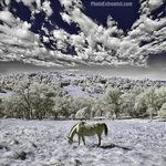 Infrared Horse