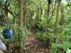 Splendid Belgian permaculture food forest, 35 years old.