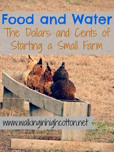 Food-and-Water-dollars-and-cents-of-starting-a-small-farm Figuring Out Food and Water...the Dollars and Cents of Starting a Small Farm
