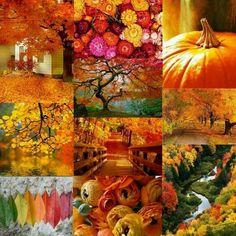 Autumn love.....