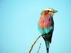 Bird Art Print / Society6 / Jess Bernstein