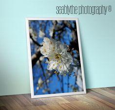 Plum BlossomPeacefulFresh Original Photography for by seablythe