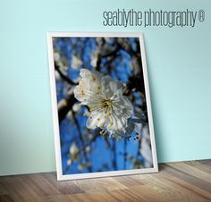 Plum BlossomPeacefulFresh Original Photography for by seablythe