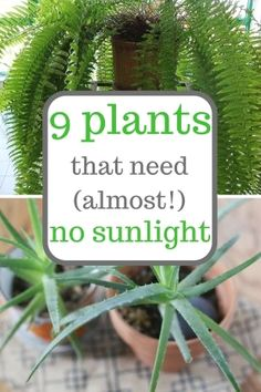 Gardening Indoor Plants that grow with little sunlight. Gardening, Gardening Tips, Indoor Gardening, Low Sunlight Plants - Got a corner of the home with no sunlight? Brighten things up with no sunlight plants! Organic Gardening, Gardening Tips, Indoor Gardening, Plants Indoor, Gardening Supplies, Gardening Shoes, Vegetable Gardening, Outdoor Gardens, Shade Garden