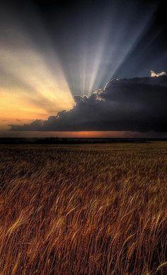 Sun awakes over a golden wheat field in Kansas
