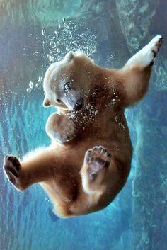 Polar bear by C.S. Drake
