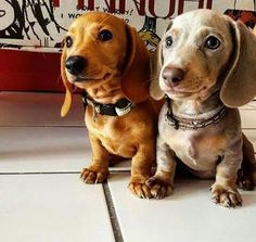Double trouble= Double Cuteness- For SURE!