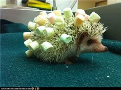 cute animals - Daily Squee: Decorated Hog