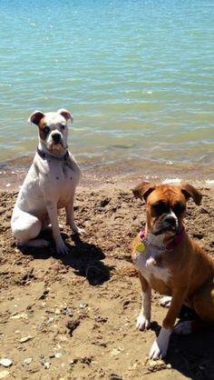 Megs Georgia Boxers Pinterest Boxer Dogs Boxer And Boxer Love
