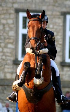 hunter jumper horse equine photo image jump rider equestrian show competition dressage. Still standing. Cute Horses, Horse Love, Beautiful Horses, Dressage Horses, Draft Horses, Horse Pictures, Horse Photos, English Riding, Show Jumping