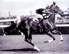 The great Phar Lap. A must see!