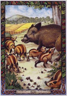 Druid Animal Oracle Deck by Bill Worthington | LRS - The Druid Animal Oracle] Painted by Bill Worthington, Sow ...