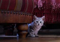 Kätzchen, Katze, Niedlich, Tier, Katzen