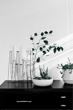 Styling, plants. http://www.thedesignchaser.com/