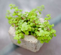 Hypertufa Concrete Pot low square without plant by trulyunruhly, $18.00