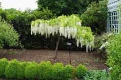 Try this English-inspired all-white garden concept in your backyard