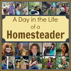 Homestead Truths: What it's really like to live a day as a homesteader (minus the sugarcoating).