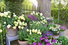 tulips garden care 45 Casual Diy Garden Pots Containers Design Ideas On A Budget - Gardening can be one of the most rewarding activities you will ever do. It can also be the most time consuming. It doesnt matter if your garden is bi. Tulips Garden, Garden Bulbs, Garden Pots, Planting Flowers, Flower Plants, Potted Garden, Flower Gardening, Container Design, Container Plants