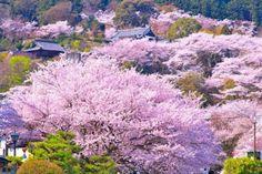 三井寺  (Mitsuji)