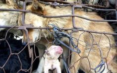 They Kill Puppies in YuLin. #monsters #stopyulin2015 www.stopdogmeat.com