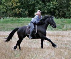 Den som intet våger, intet vinner! Betta, Liberty, Freedom, Horses, Animals, Beautiful, Political Freedom, Political Freedom, Animales