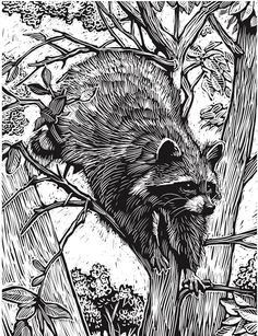 Welcome to Dover Publications Creative Haven Deluxe Edition Animal Woodcut Designs Coloring Book Art And Illustration, Ink Illustrations, Woodcut Art, Linocut Prints, Animal Drawings, Art Drawings, Raccoon Art, Racoon, Scratchboard Art