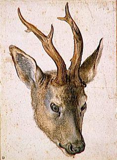 Albrecht Dürer - Head of a deer, 1514