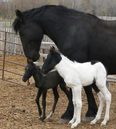 Mare and foals