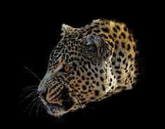 """Check out new work on my @Behance portfolio: """"Leopard"""" http://on.be.net/11iHH9l"""