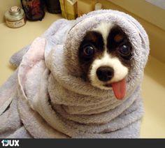 Hunde badetag